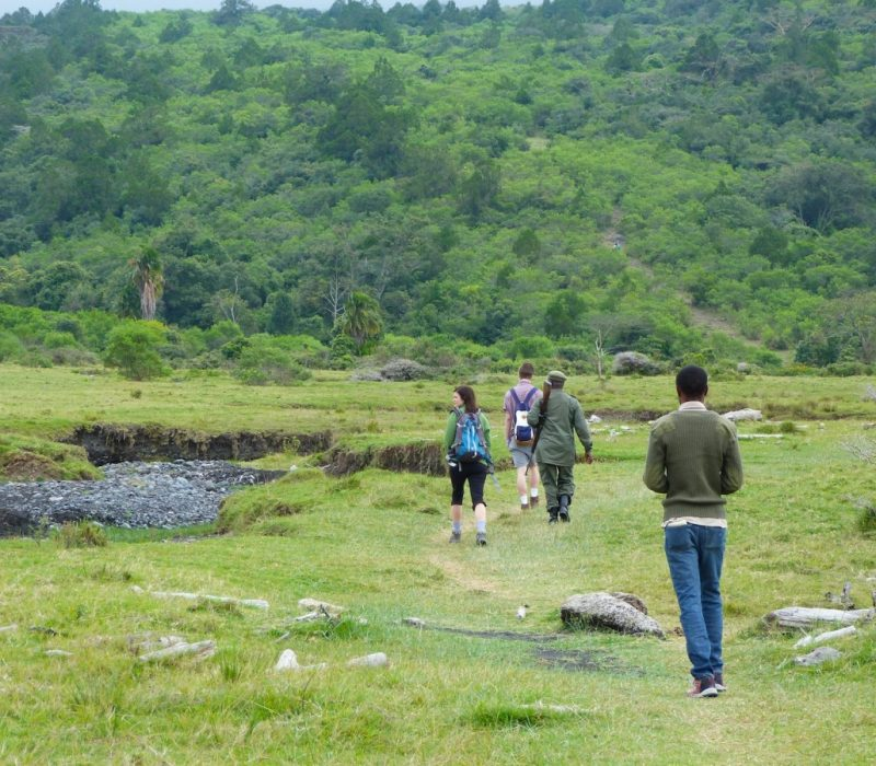 Arusha national park, as well as the tallest mountain in Africa,