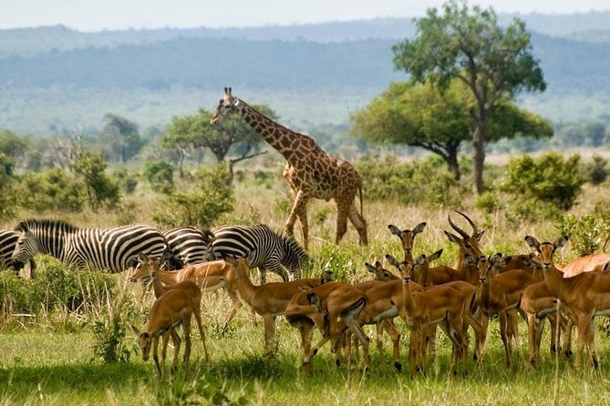 2 Days Game Drive in Mikumi National Park2