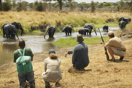 2 Days Game Drive in Mikumi National Park3