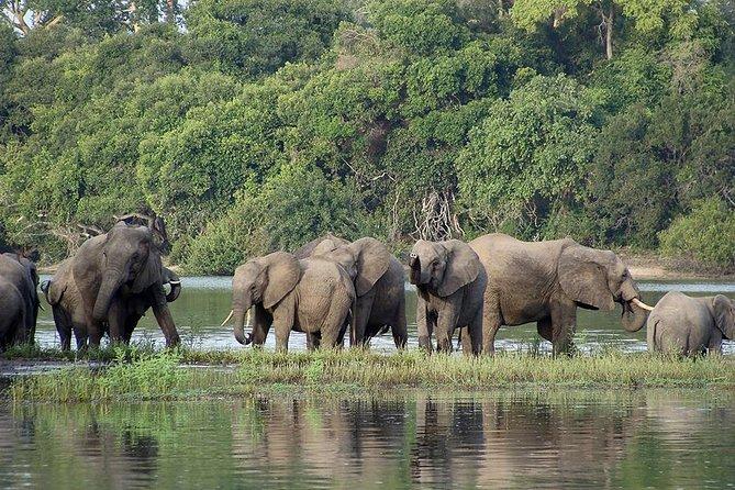 3 Days Wildlife Safari in Selous Game Reserve