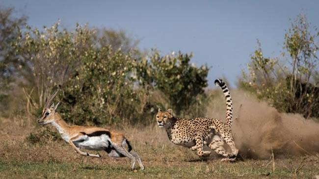 4 Days Safari in Ruaha National Park1