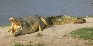 4 Days Safari in Ruaha National Park2