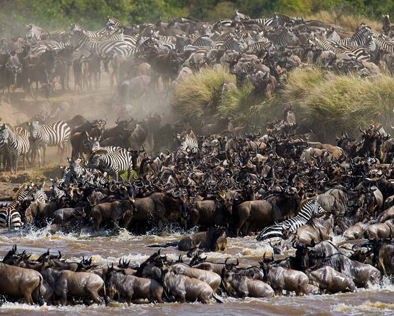 5 Days Luxury Migration Safari