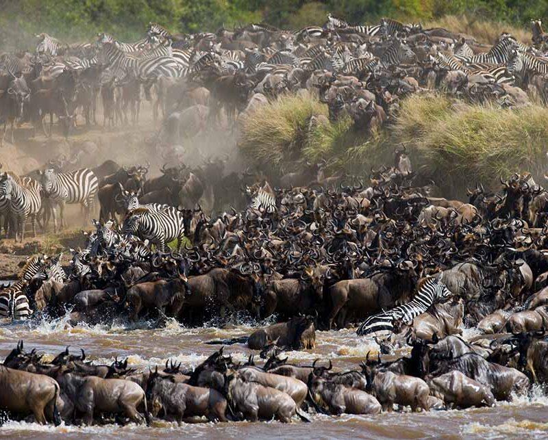 5 Days Luxury Migration Safari