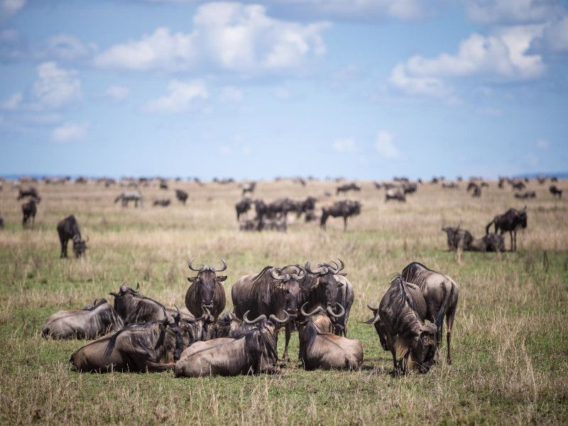 5 Days Luxury Migration Safari2