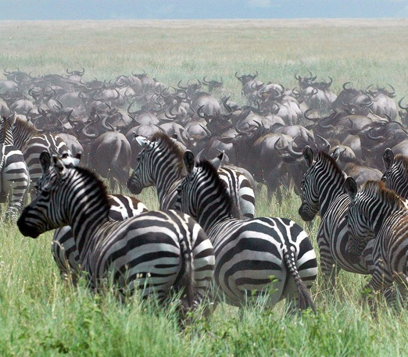 5 Days Luxury Migration Safari3
