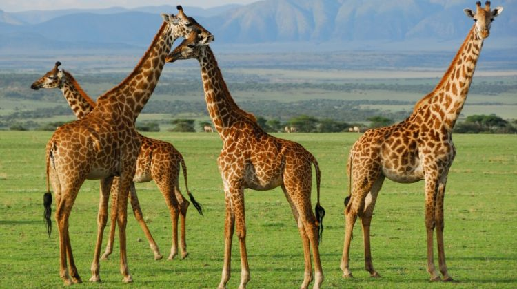 5 Days Safari Lake Manyara, Serengeti & Ngorongoro