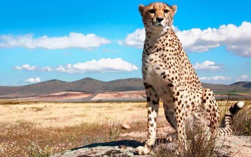 5 Days Safari Lake Manyara, Serengeti & Ngorongoro2