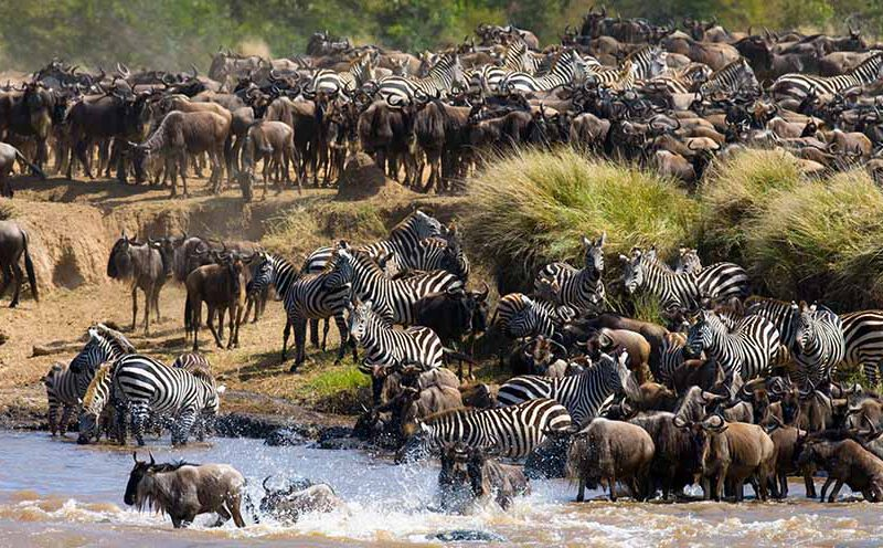 6 Days Best Tanzania Migration Safari