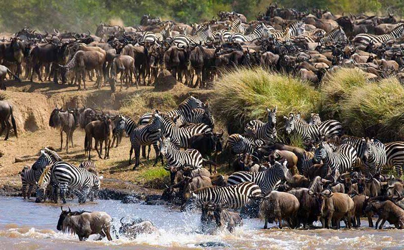 6 Days Best Tanzania Migration Safari