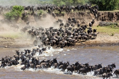 6 Days Best Tanzania Migration Safari2