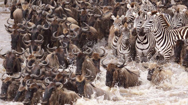 6 Days Best Tanzania Migration Safari3