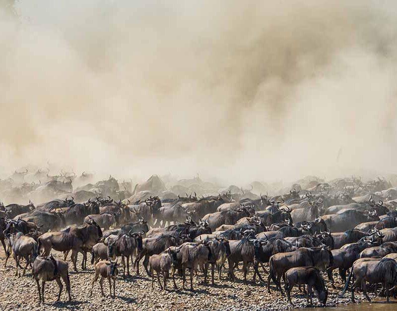 6 Days Best Tanzania Migration Safari4