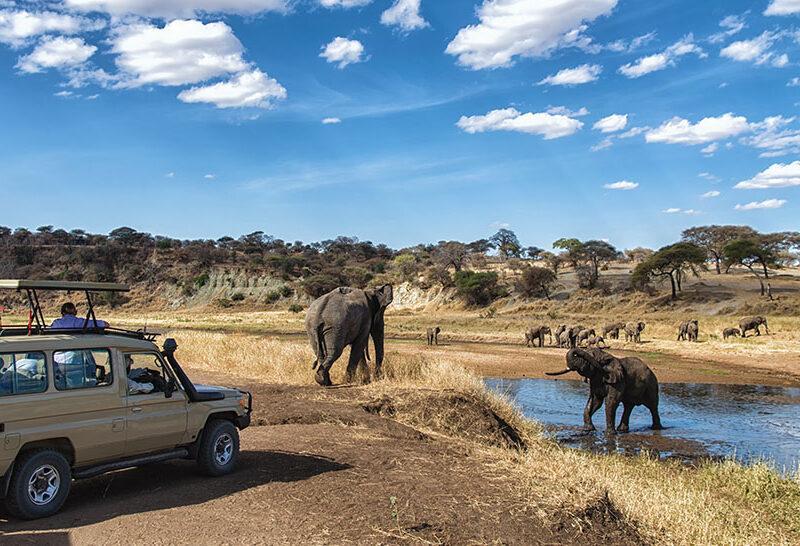 6 Days Safari in Mikumi & Ruaha National Park1