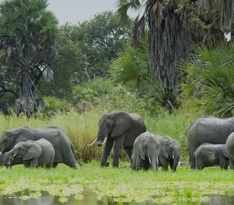 6 Days Safari in Selous & Ruaha National Park