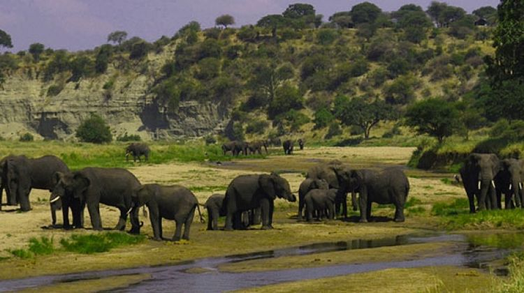 6 Days Safari in Selous & Ruaha National Park2