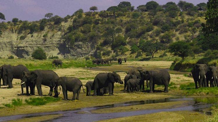 6 Days Safari in Selous & Ruaha National Park2