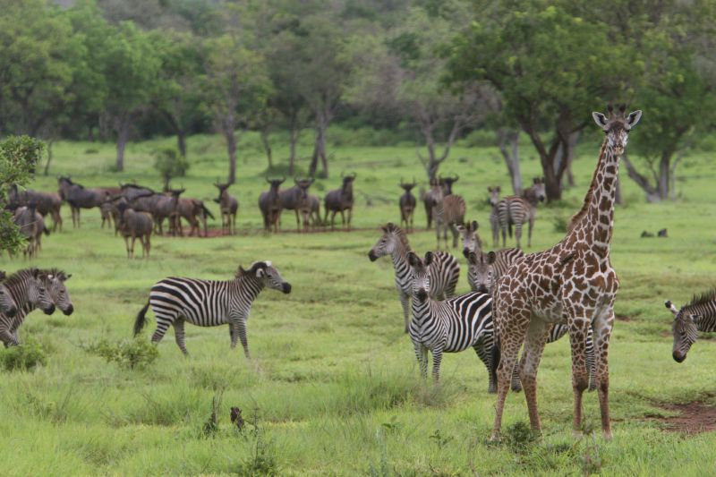 6 Days Safari in Selous & Ruaha National Park3