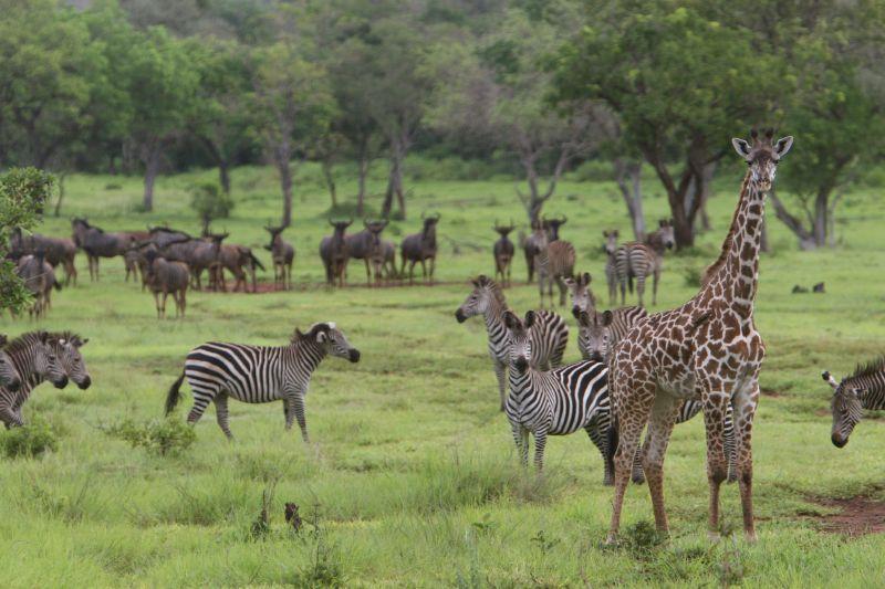 6 Days Safari in Selous & Ruaha National Park3